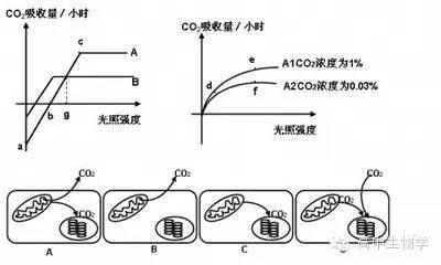 生物基础知识归纳:图解光合作用与呼吸作用-封面